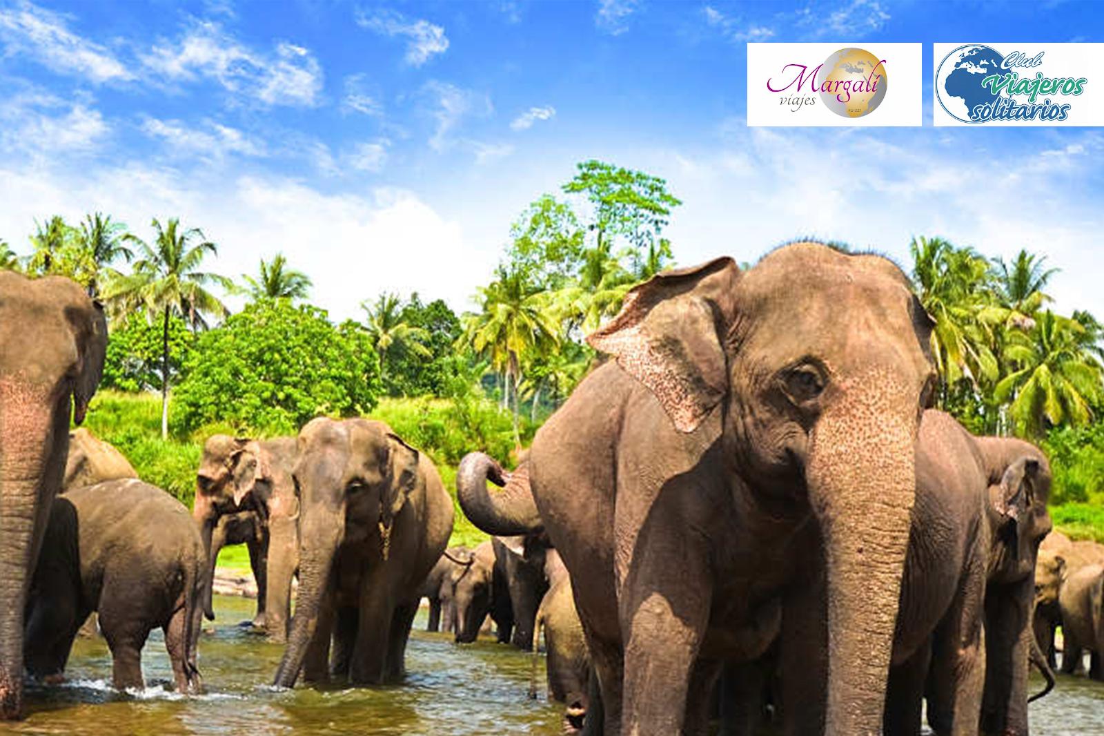 Viaje Sri Lanca del 12 al 23 de mayo.