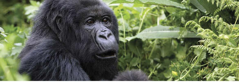 Uganda: El África más salvaje. Del 06 al 17 de marzo